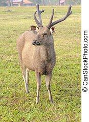 Deer standing in field near camp.