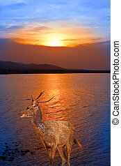 Deer standing in the sea on a sunset
