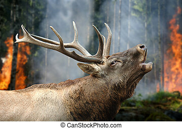 Deer stands in burning forest