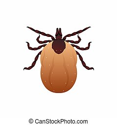 Deer tick isolated on white background