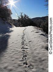 Deer Track on Fresh Snow - Fresh Deer Track on newly fallen...