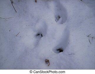 deer tracks  snow - deer foot prints in snow