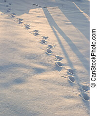 deer tracks in a fresh afternoon snow