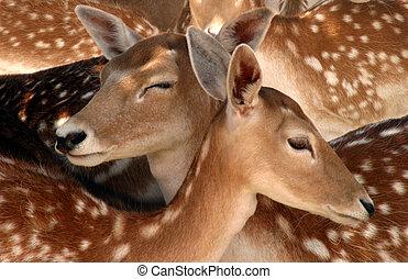 Two deer among many.