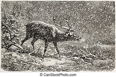 Deer under the snow old illustration. Created by Bodmer,...