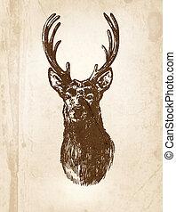 Deer - Hand - drawn illustration of deer head