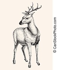 Deer vector  illustration, hand drawn, sketch