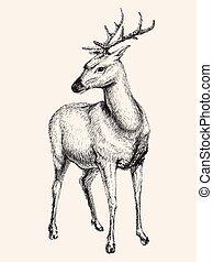 Deer vector illustration, hand drawn, sketch