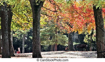 Deer walking on the maple tree for adv or others purpose use