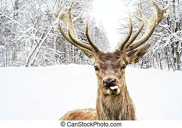 Deer with beautiful big horns on a winter country road