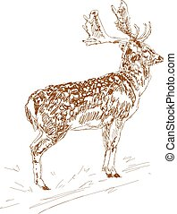 Deer with branchy horns in sketch style. Hand drawn ...
