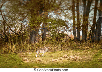 Deer with large antlers on a meadow in the fall
