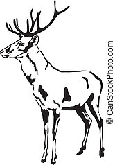 Deer with large antlers. Vector Sketch. (Cervus elaphus)