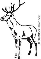 Deer with large antlers. Vector Sketch. (Cervus elaphus)