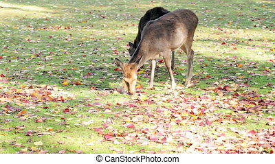 Deer with nice background for adv or others purpose use