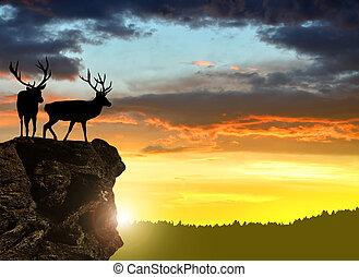 deers, צלליות