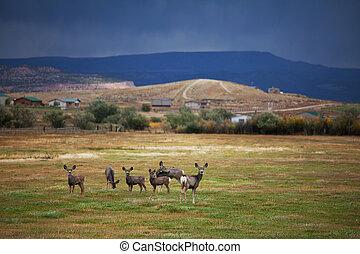 Deers in field