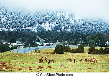 Rocky mountains - Deers in Rocky mountains