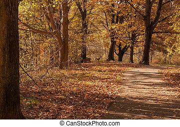 Deers in the Forest in Fall