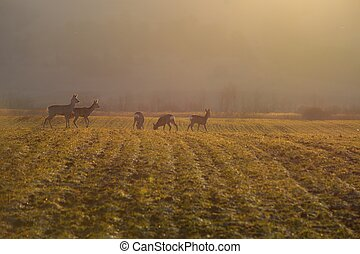 deers on meadow in the morning
