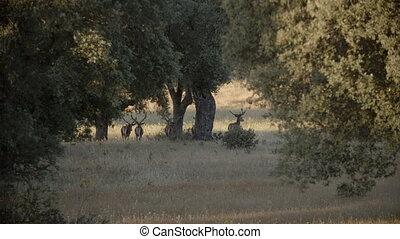 Deers walking around the grassland