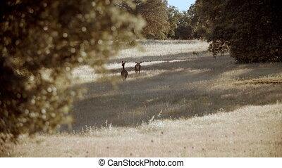 Deers walking through the grass land