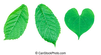 defferent of green leaf on white background