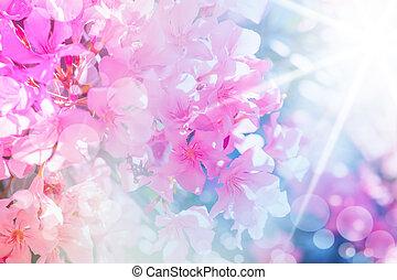 defocus, beau, fleurs roses