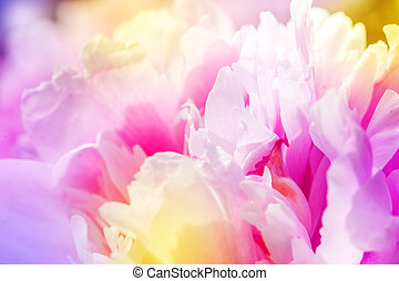 Defocus beautiful pink flowers. abstract design with color filters