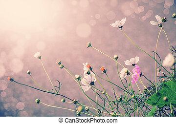 Defocus blur beautiful floral background. Purple and white...