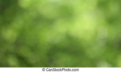 defocus, feuilles, arrière-plan vert