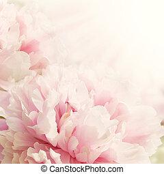 defocus, flor, closeup, peony