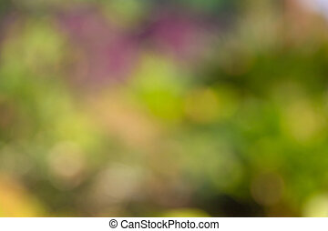 Defocused Abstract light bokeh of light on tree , Abstract background