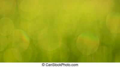 defocused, arrière-plan., herbe, bokeh, feuilles vertes, ou, naturel