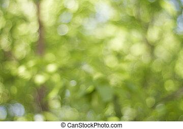 defocused, drzewa