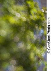 defocused, grüner hintergrund