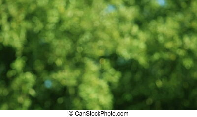 defocused leaves on a windy day - trees in soft focus during...