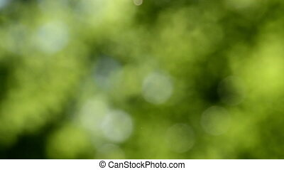 Defocused nature background. Blurred leaf forest.