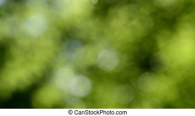 Defocused nature background. Blurred leaf forest.