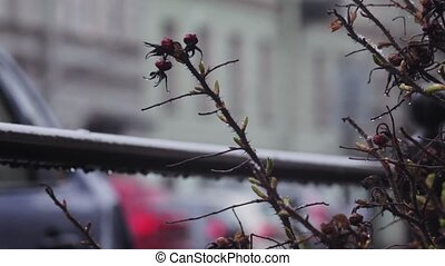 Defocused road with passing cars and the focused twig thorny plants. street rain