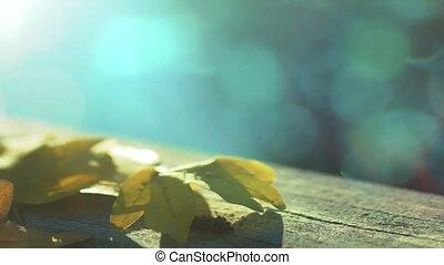 Defocusing autumn leaf. Autumn scene with beautiful bokeh