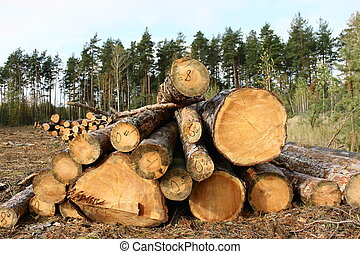 Deforestation - A few logs in the pine forest