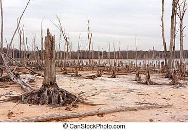 Deforestation - A lake and dead, fallen trees. Land that was...