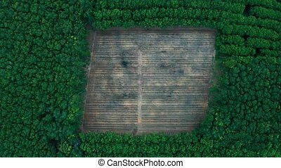 Deforestation - aerial view in tropical forest - ...