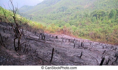 Deforestation, after forest fire, natural disaster, Laos