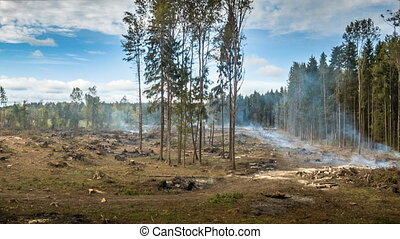 Deforestation and wildfire - Deforestation and the ...