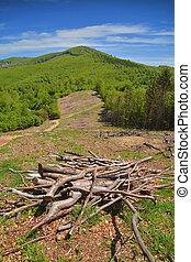 deforestation area in romania. stack of logs in the...