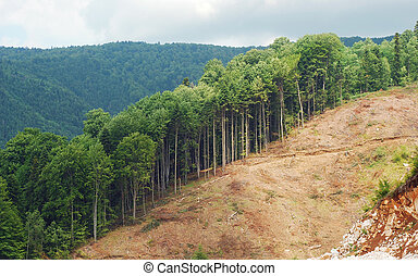 deforestation area, one of many recently cut forests in...