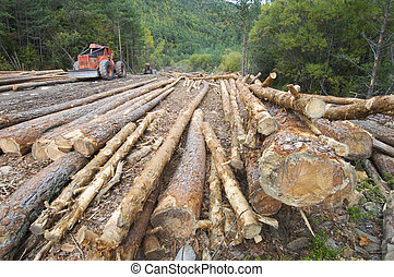 deforestation - buldozer and cutted trunks in a forest