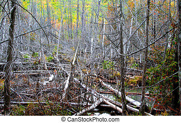 Dead trees in a forest during autumn time